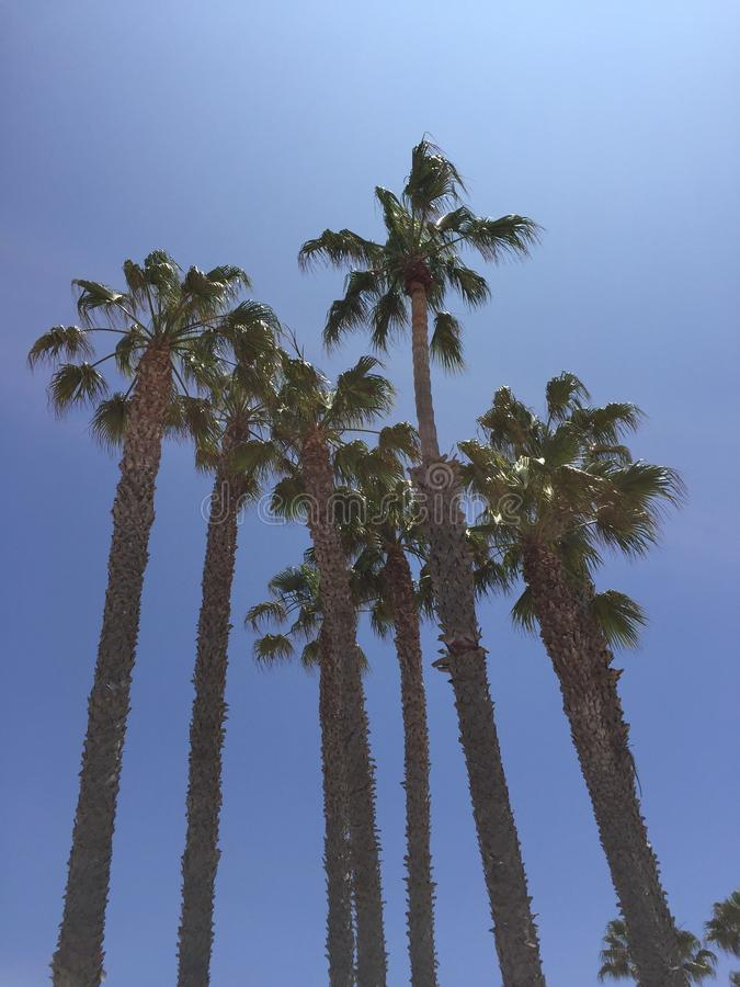 Palms California beach royalty free stock photography