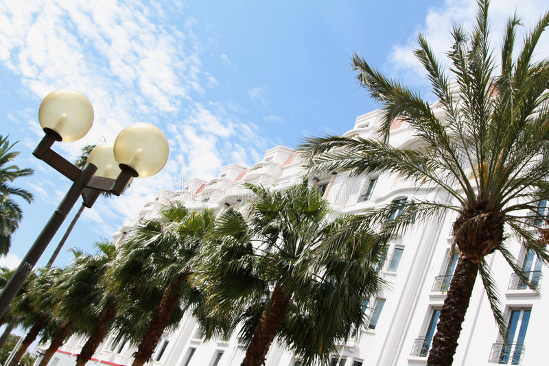 Palms in Cannes stock images