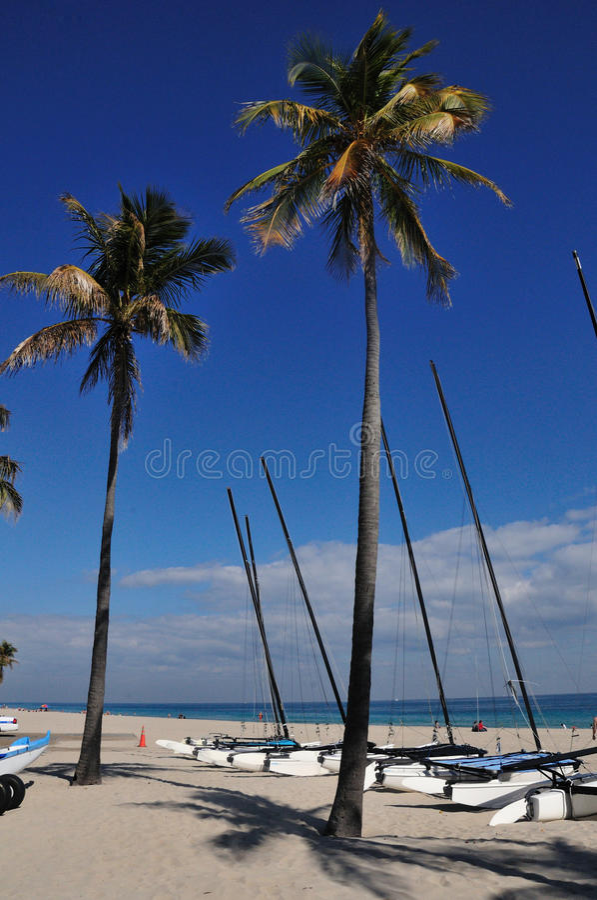 Palms and catamarans royalty free stock photos