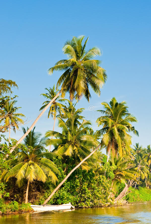 The palms close to water in sunny day royalty free stock photography