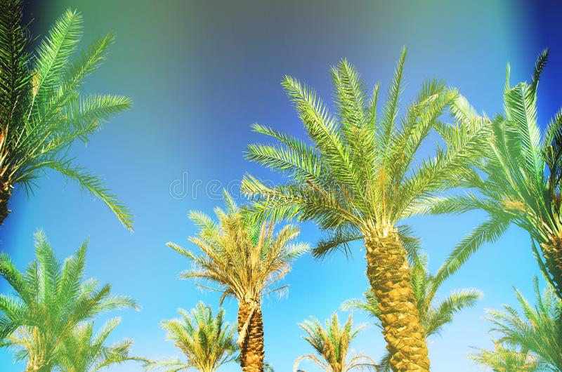 Palms with colorful pop art effect. Vintage stylized photo with light leaks. Summer palm trees over sky on beach stock photo