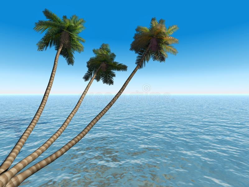 Palms on an exotic tropical be stock photos