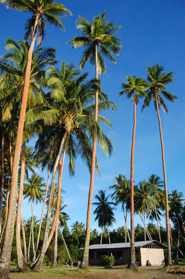 Download Palms And House In Papua New Guinea Village Stock Image - Image of palm, building: 28783169