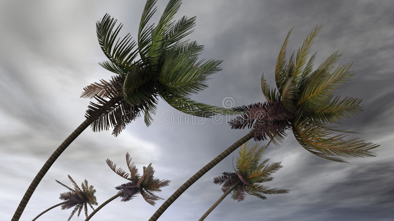 Palms at hurricane royalty free stock photography