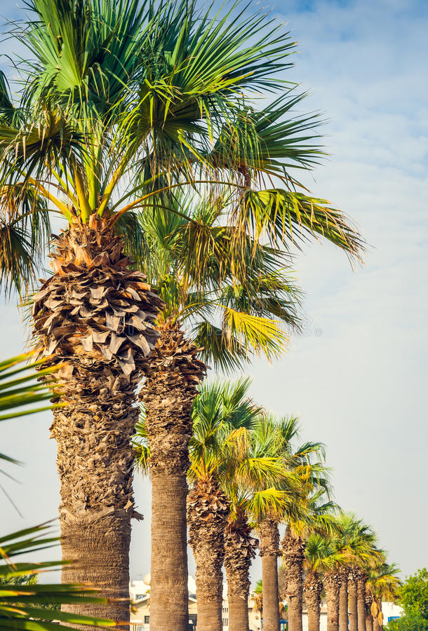 Free Palms In A Row Stock Photos - 36625043