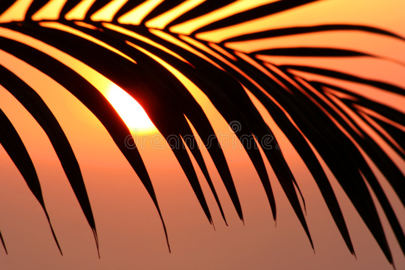 Palms infront of the sun stock photo