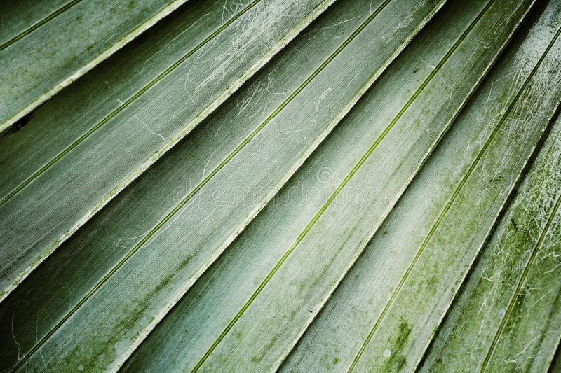 Palms leaves. royalty free stock photo
