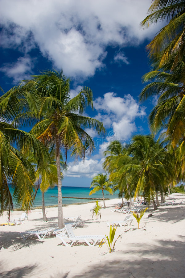 Palms and loungers on a white sand beach royalty free stock photography