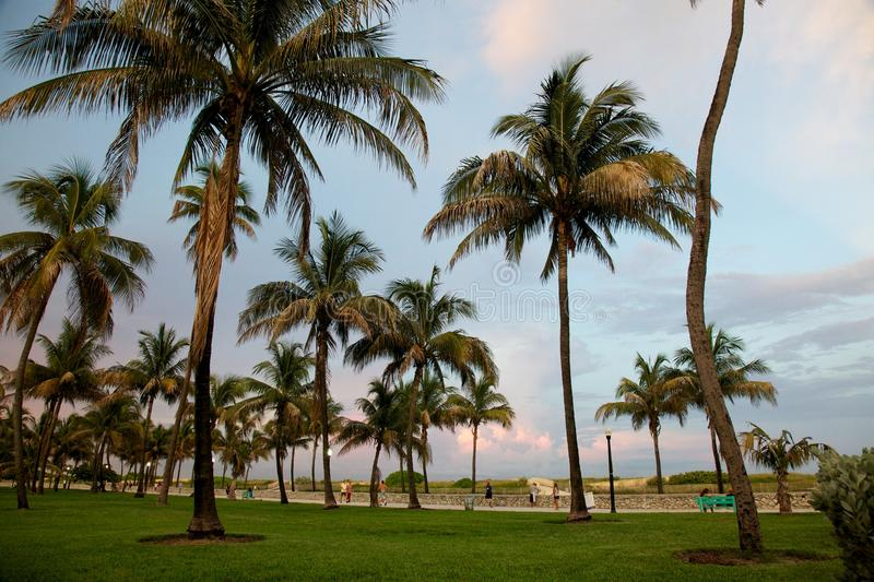 Palms in Miami Beach before sunset royalty free stock images