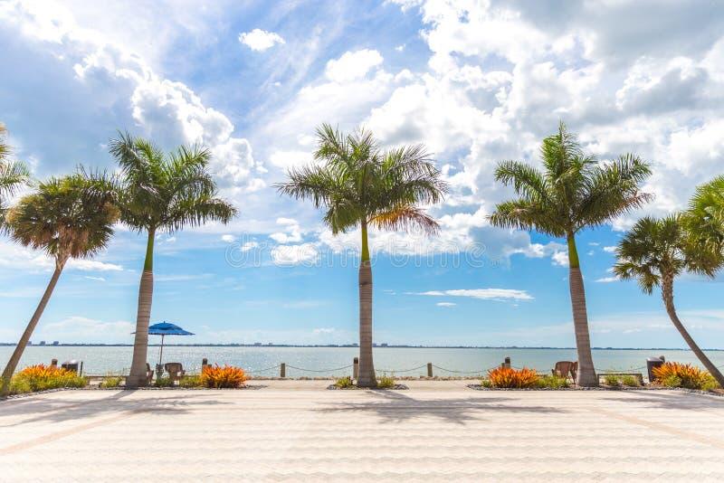 Five beautiful palms in sunny Florida USA. Palms in Miami Florida USA stock photos