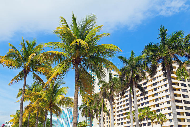 Download Palms And Modern Buildings Of Miami Beach. Stock Image - Image: 42046021