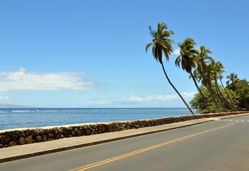 Palms near road royalty free stock photo