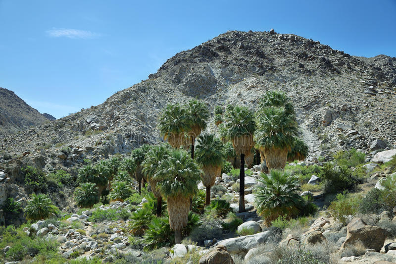 49 palms Oasis in Joshua Tree National Park. California royalty free stock photography