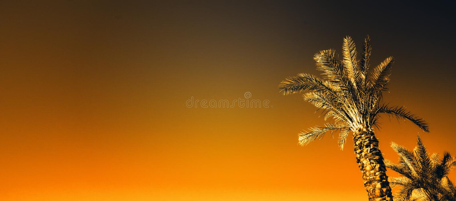 Palms with orange pop art effect. Vintage stylized photo with light leaks. Summer palm trees over sky on beach. Holiday. And travel concept. Copy space. Banner stock images