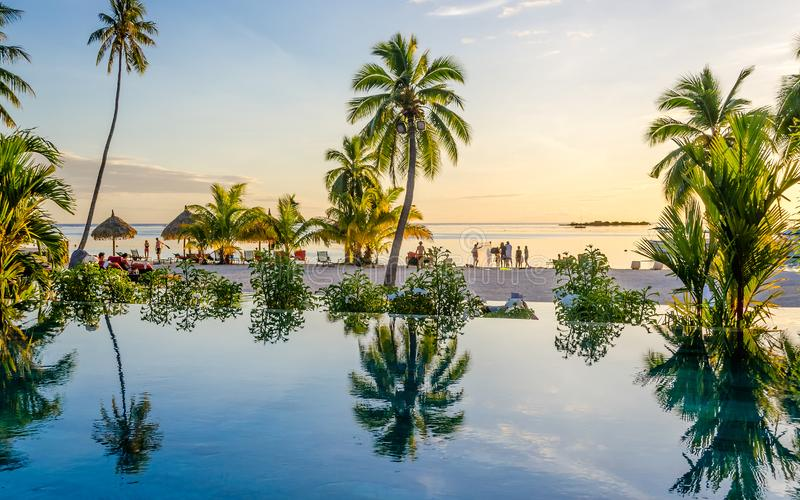 Palms over an infinity pool on the beach, French Polynesia stock photo