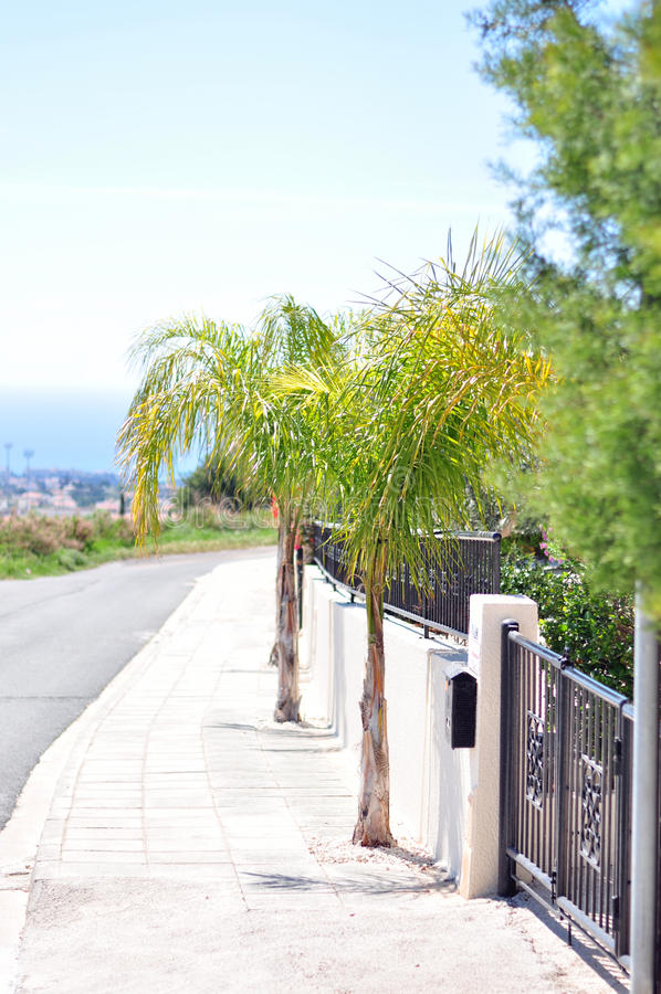 Palms on the road stock images