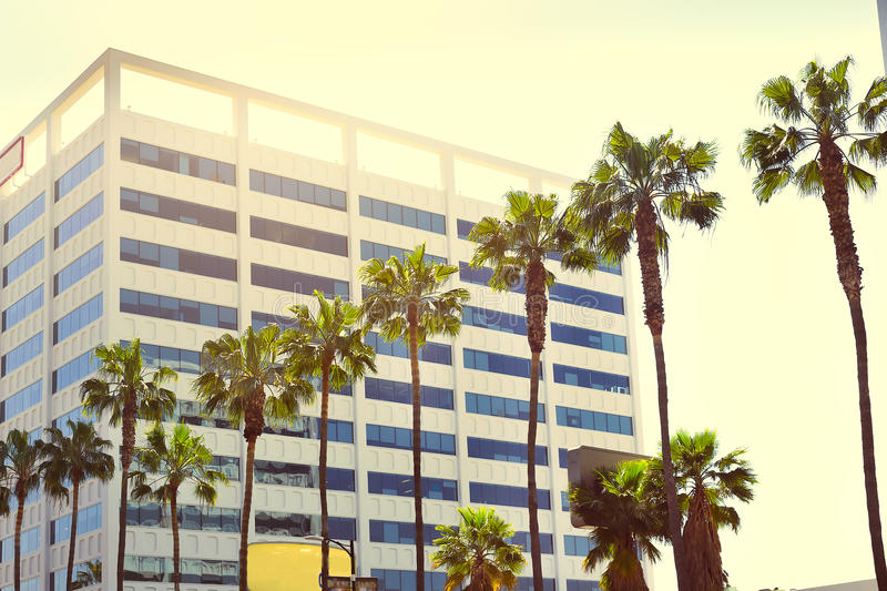 Palms in a row against the background of a multi-storey building. In the sunlight on Hollywood Boulevard; Vintage effect royalty free stock photos
