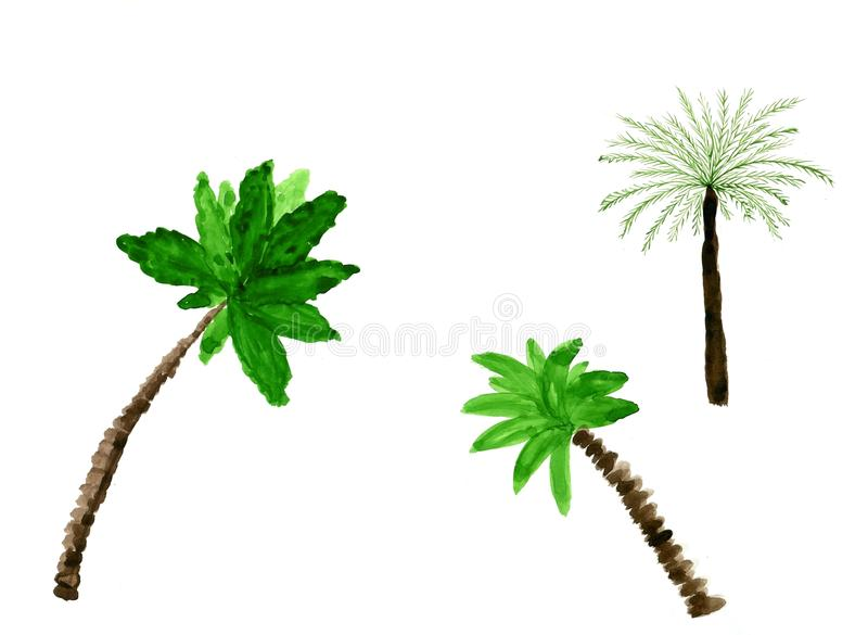 Palms. Set of tropical trees of different types of trunks and foliage. Watercolor painting on white background. vector illustration