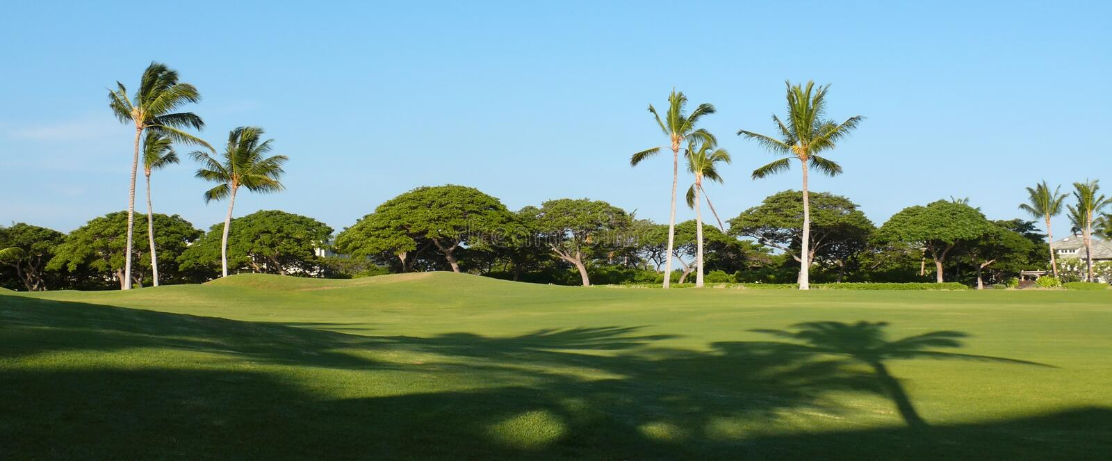 Palms and shadows on a golf field. Golf field near Kings plaza on Big Island royalty free stock images