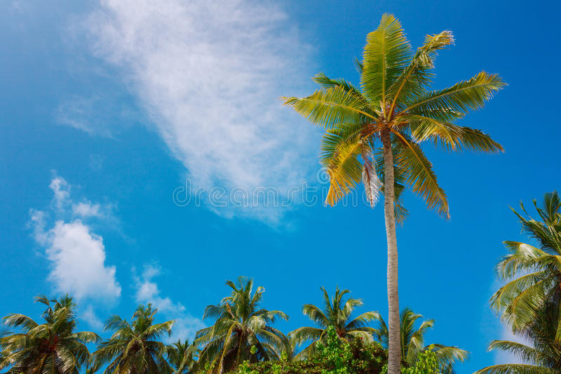 Palms on the sky background. Idyllic palm trees on the sky and cluds background, tropical postcard royalty free stock photo