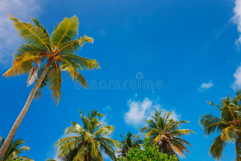 Palms on the sky background. Idyllic palm trees on the sky and cluds background, tropical postcard royalty free stock images