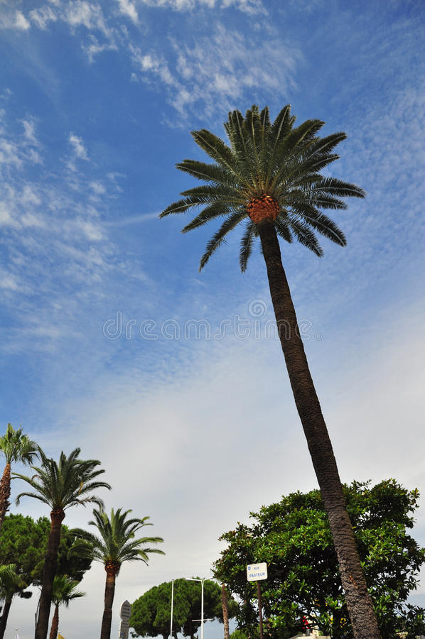 Palms and sky in Cannes