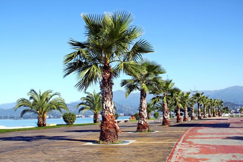 Batumi Park of Palms stock photos