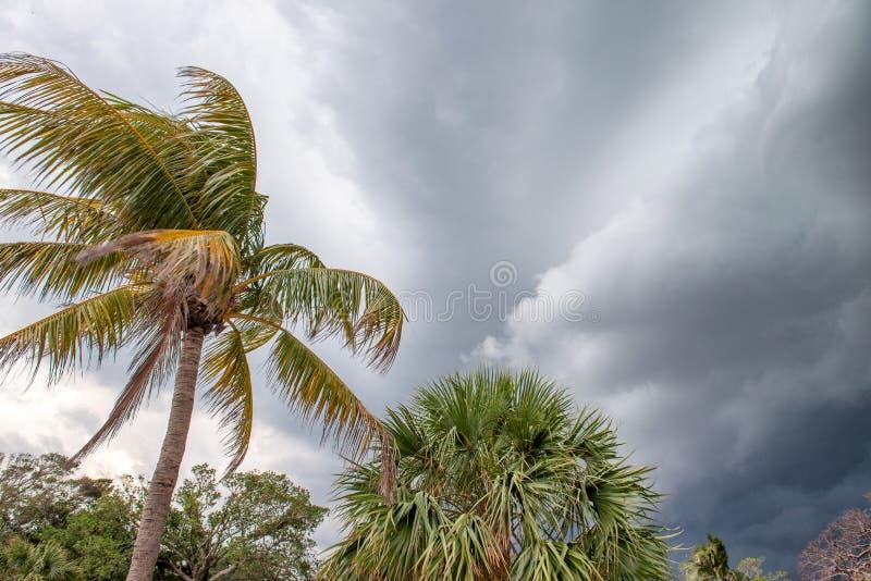 Palms som vinkar i vinden på en stormig dag fotografering för bildbyråer