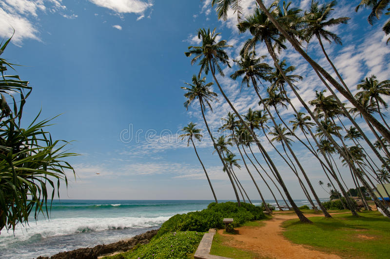 Palms in Sri Lanka. Palms, ocean and cloud in Sri Lanka stock photography