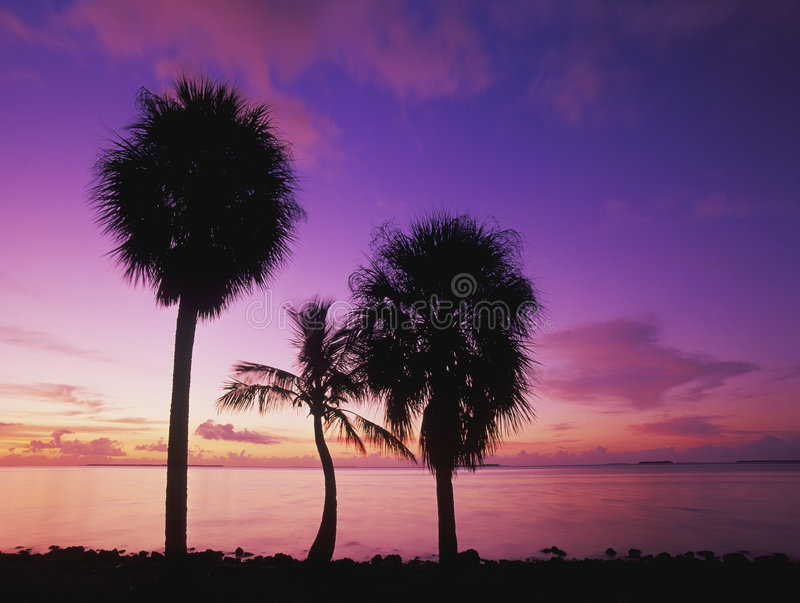 Palms at Sunrise royalty free stock photography