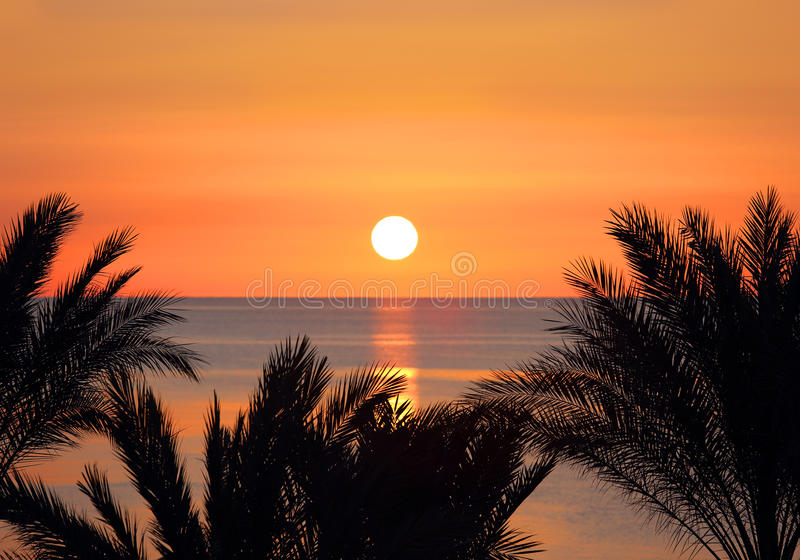 Palms and sunrise over sea royalty free stock photos