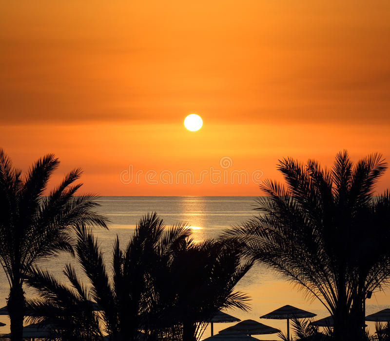 Palms and sunrise over sea stock photos