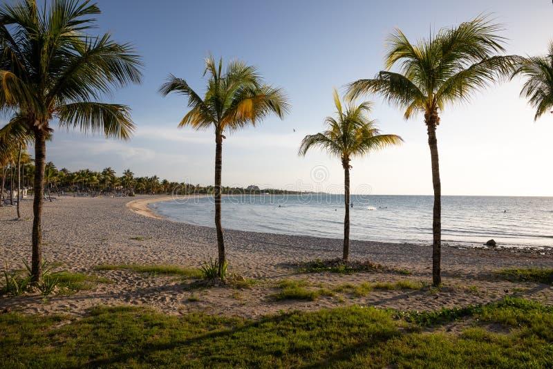 Palms on the sunset beach. Ocean Palms on the sunset beach in Cuba ,Varadero royalty free stock photo