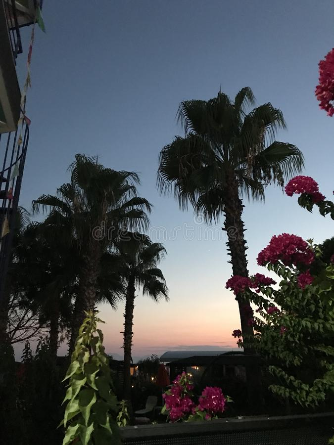 Palms during the sunsets. Flowers and two palms during the sunsets on resorts in Belek, Turkey royalty free stock photo