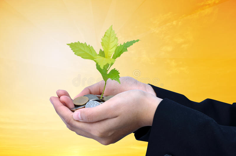 Palms with a tree growing. From pile of coins with gold background stock image
