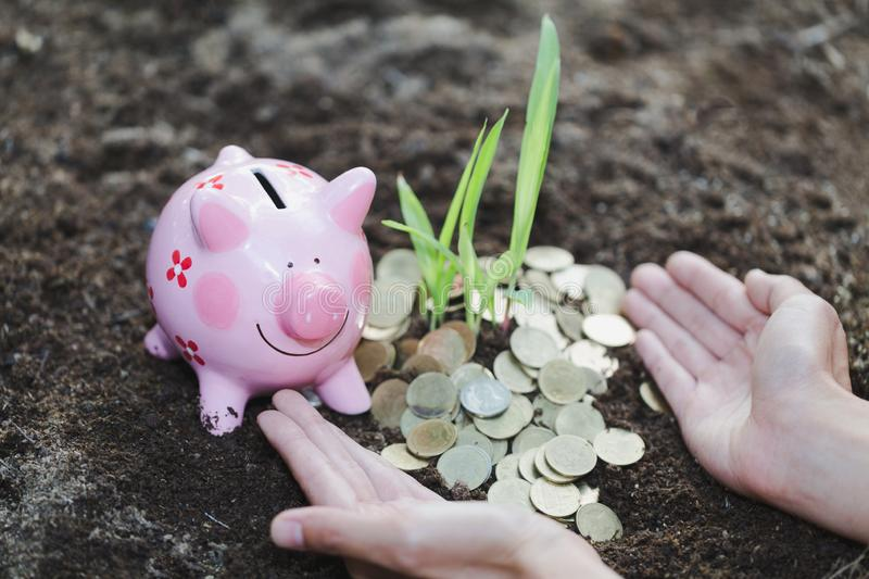 Palms with a tree growing from pile of coins, hands holding a tr stock photos