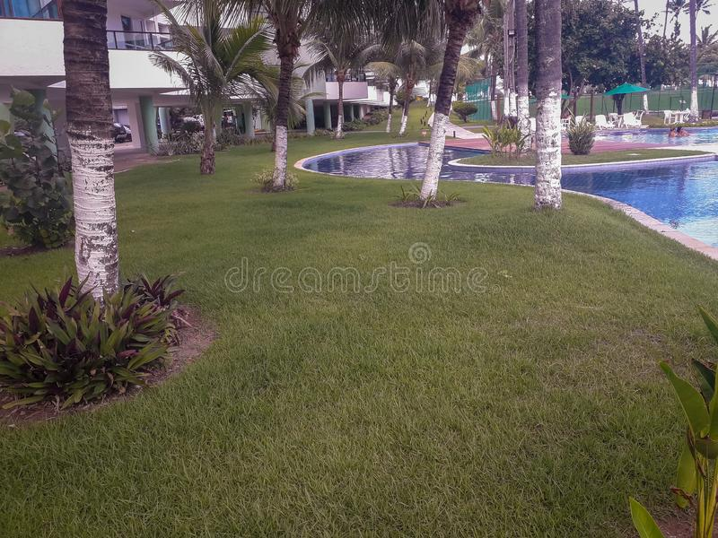 Palms and trees in Flat Resort of Brazil royalty free stock photography