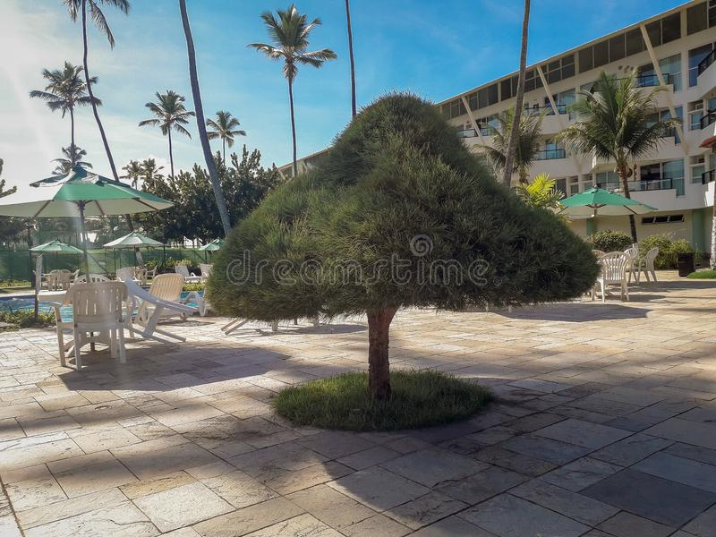 Palms and trees in Flat Resort of Brazil stock photography