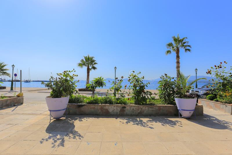 Palms trees and sea view stock photography