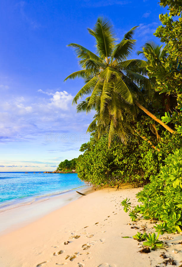 Download Palms on tropical beach stock photo. Image of holiday - 14402988