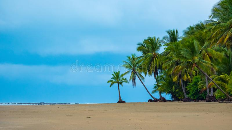 Palms on a tropical beach royalty free stock photo