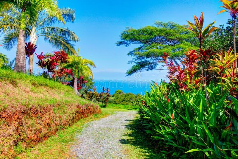 C Gardens Maui Garden Ftempo