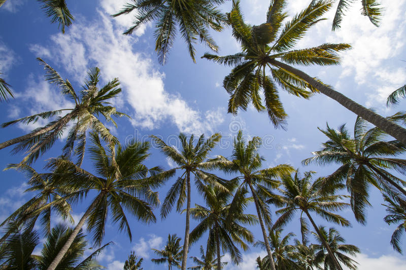 Download Palms under sky stock photo. Image of idyllic, bright - 34386518