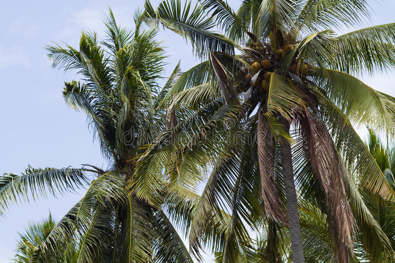 Download Palms under sky stock image. Image of paradise, flora - 34387577