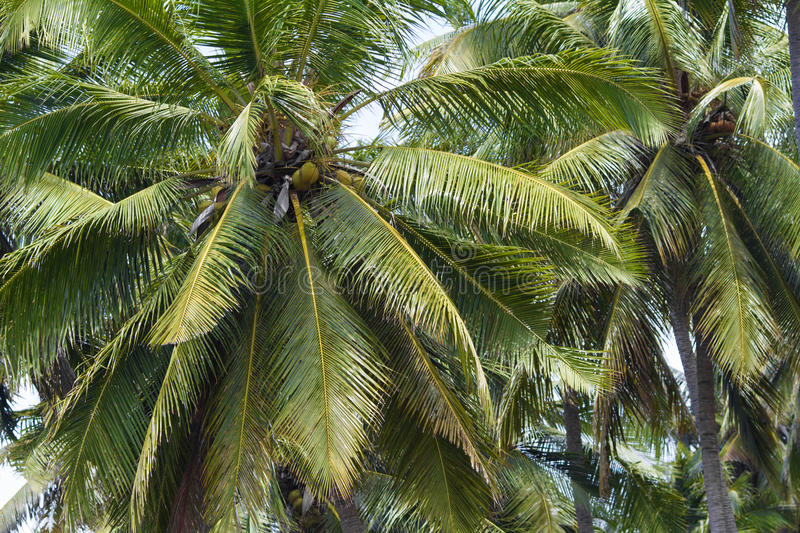 Download Palms under sky stock photo. Image of beauty, leaf, relax - 34387596