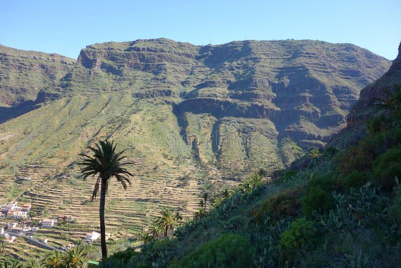 Palms in Valle Gran Rey. La Gomera Canary island royalty free stock photos