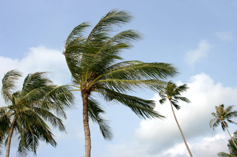 Palms and wind. stock photos
