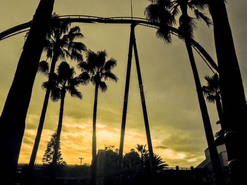 Palmschaduw royalty-vrije stock afbeelding