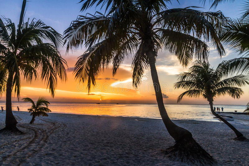 Palmsilhouet bij zonsondergang royalty-vrije stock afbeeldingen