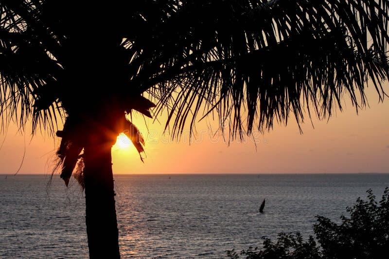 Palmsilhouet bij zonsopgang of zonsondergang met zon die door piepen stock foto